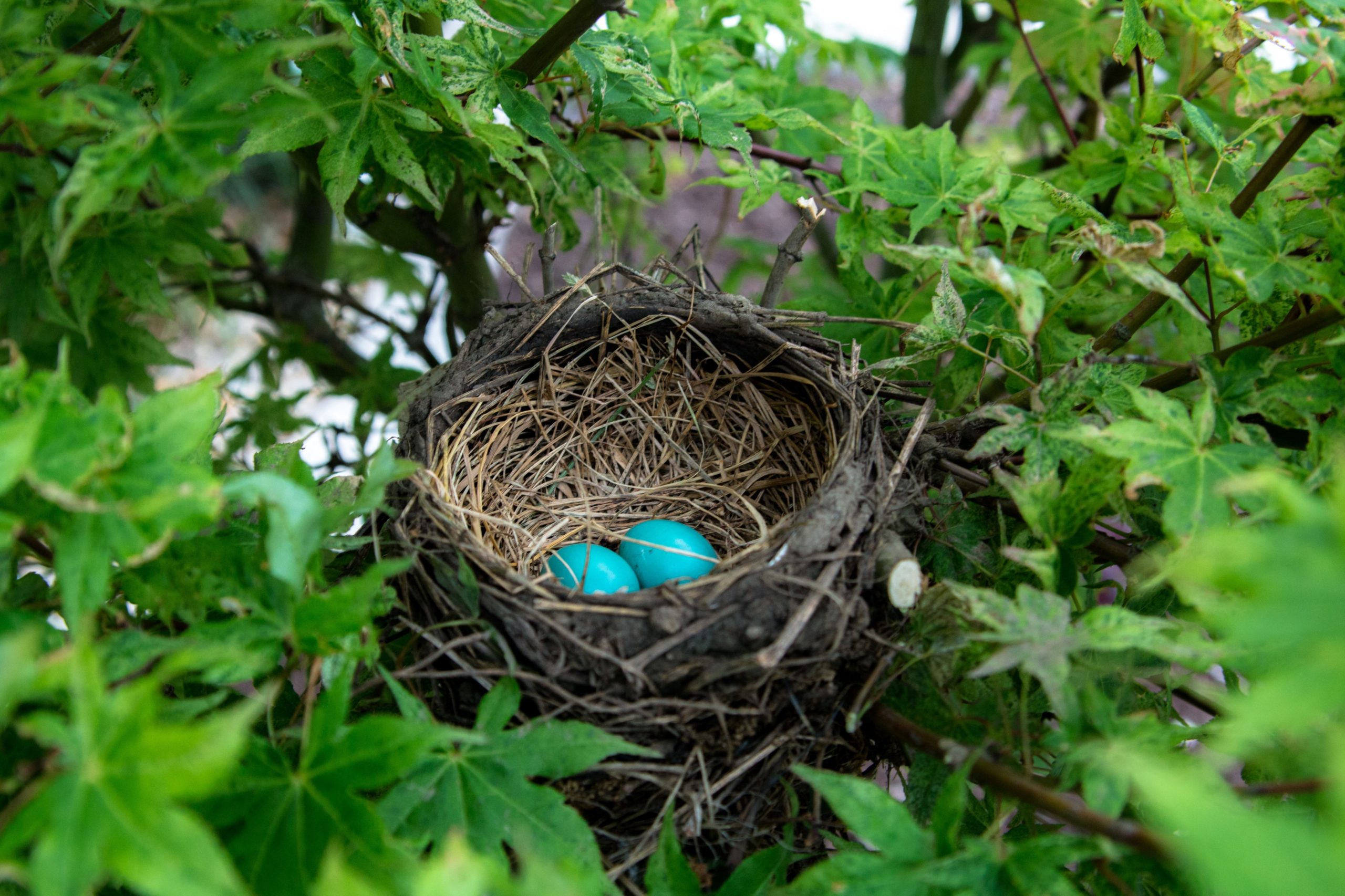 Building a Nest Egg Isn't Hard